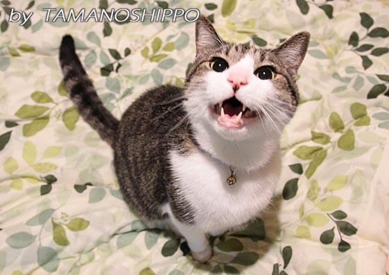 お話する猫5604