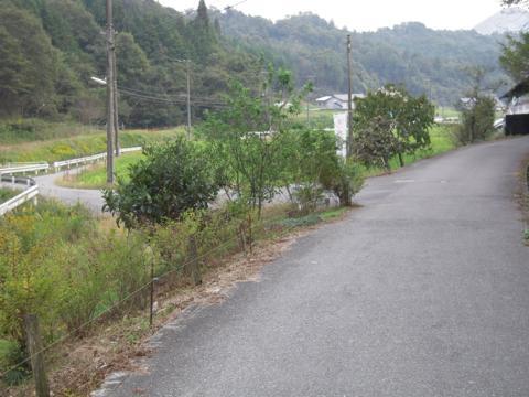 kobako_40.jpg