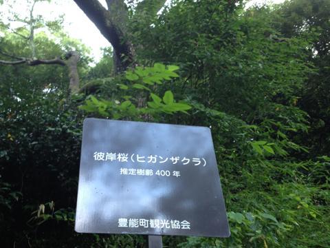 kodaiji_43.jpg