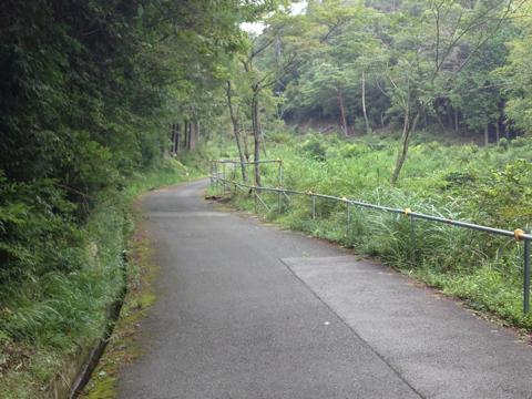 sakuragi_04.jpg