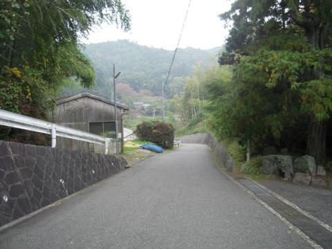 sakuras_06.jpg