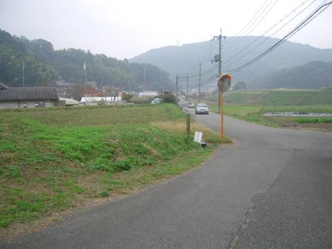 sakuras_43.jpg