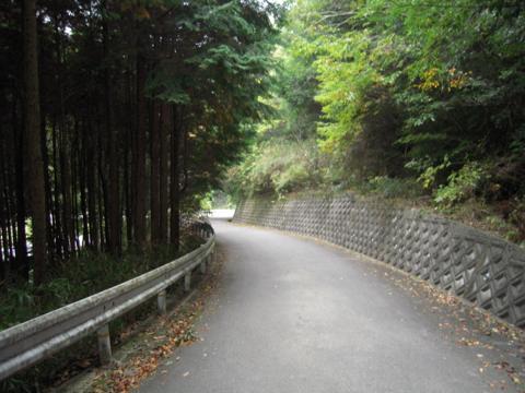 shikak_28.jpg