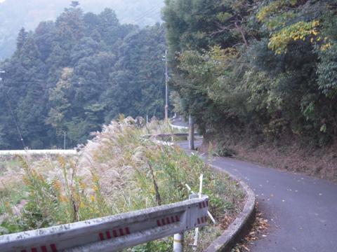 shikak_37.jpg