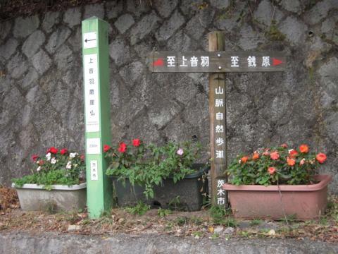 shikak_45.jpg