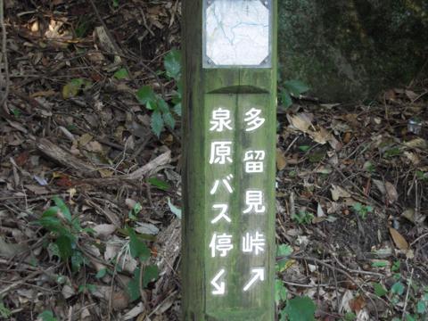 tarumi_04.jpg