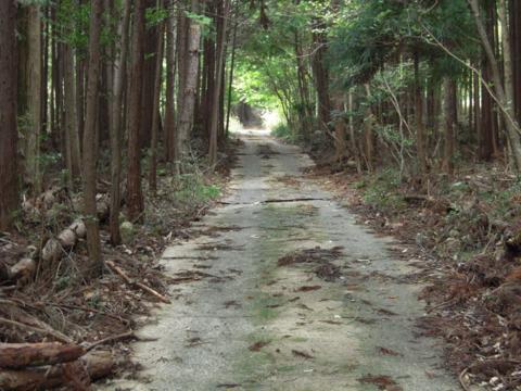 yamabe_42.jpg