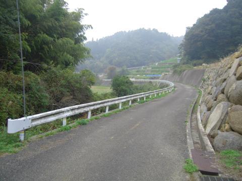 zenitana_08.jpg
