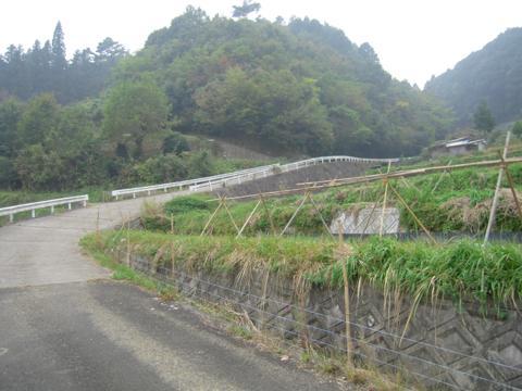zenitana_09.jpg