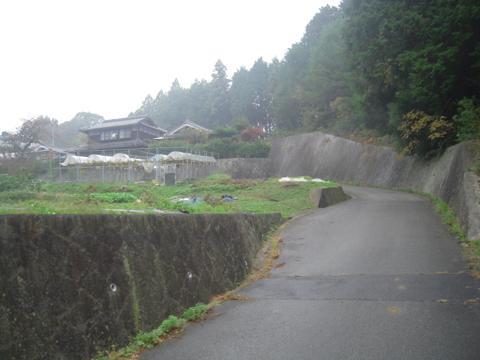 zenitana_35.jpg