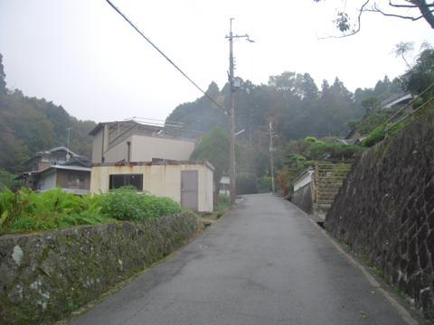 zenitana_44.jpg