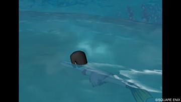 泳ぎまくったね!