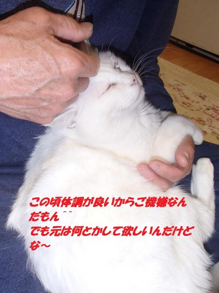 PB262562_convert_20141126114648.jpg