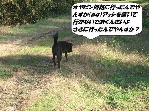 PB272592_convert_20141128124946.jpg