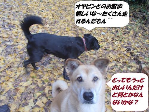 PB272602_convert_20141128125100.jpg