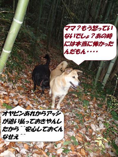 PC022658_convert_20141203141951.jpg