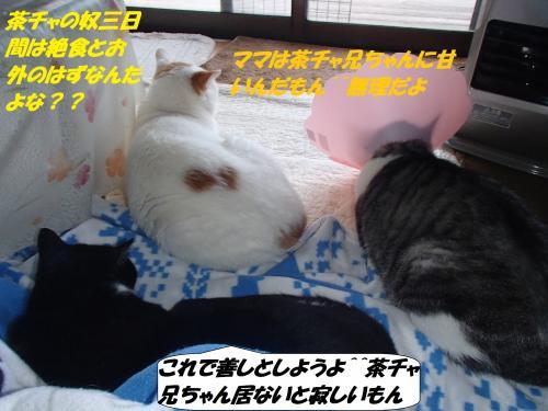 PC060054_convert_20141207133352.jpg