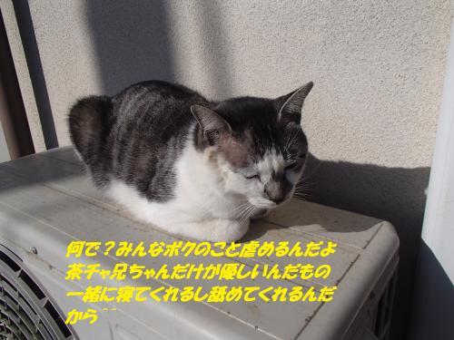 PC100110_convert_20141212101217.jpg
