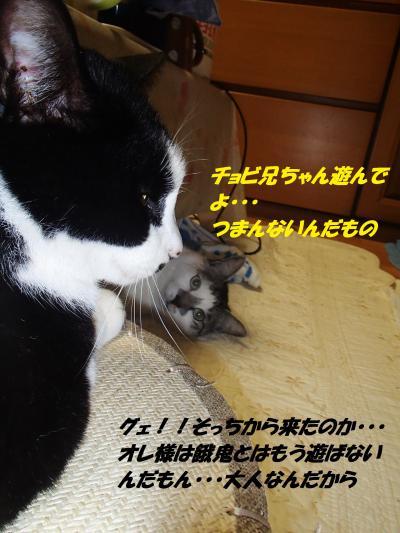 PC110140_convert_20141213133315.jpg
