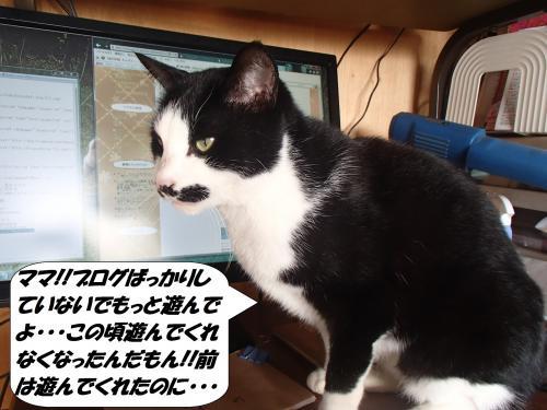 PC120146_convert_20141213133605.jpg