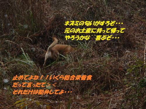 PC130155_convert_20141218141036.jpg