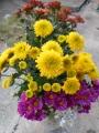 20131028 仏花