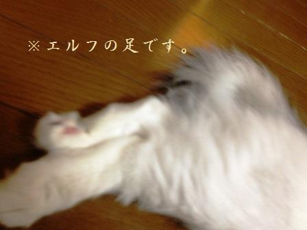 IMG_5417.jpg
