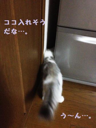 IMG_5459.jpg
