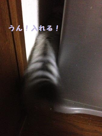 IMG_5461.jpg