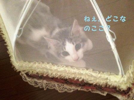 IMG_5553.jpg