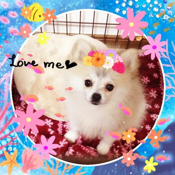 fc2blog_20131111135356a8d.jpg