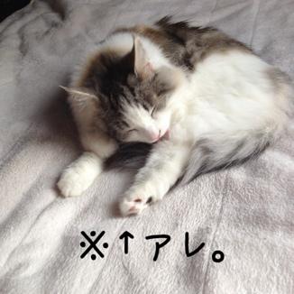 fc2blog_201311111433299e9.jpg