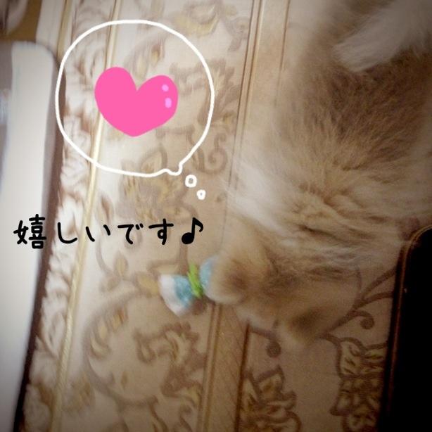 fc2blog_20131114120526b2d.jpg