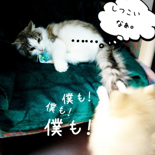 fc2blog_20131117003141ab5.jpg