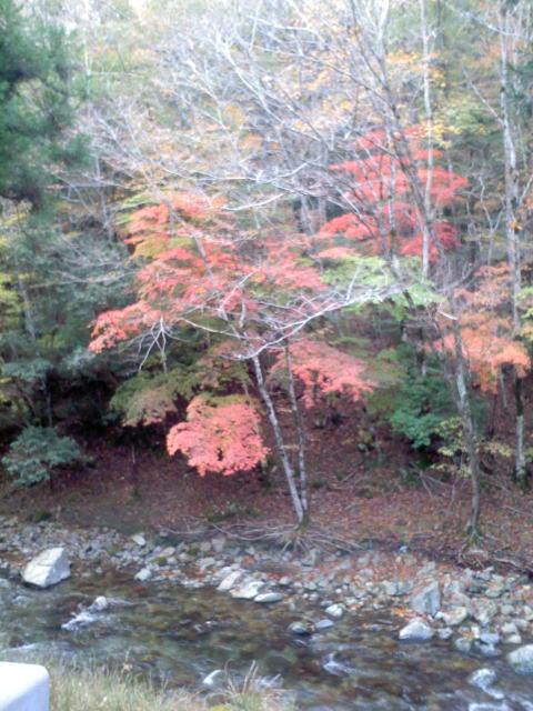水汲み場 紅葉