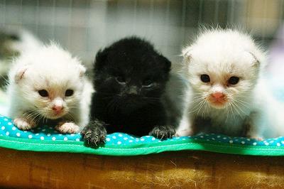 kitty5_24.jpg