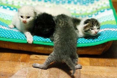 kitty5_26.jpg