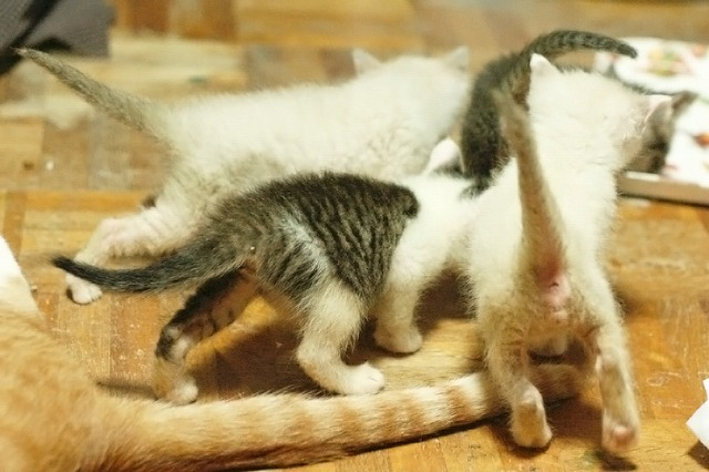 kitty5_32.jpg