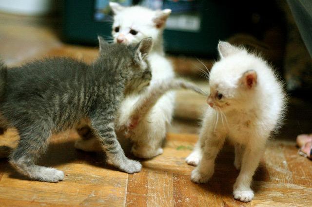 kitty5_35.jpg