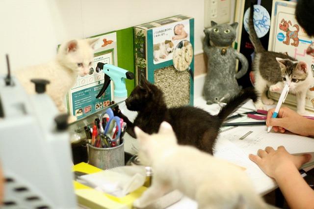 kitty5_36.jpg