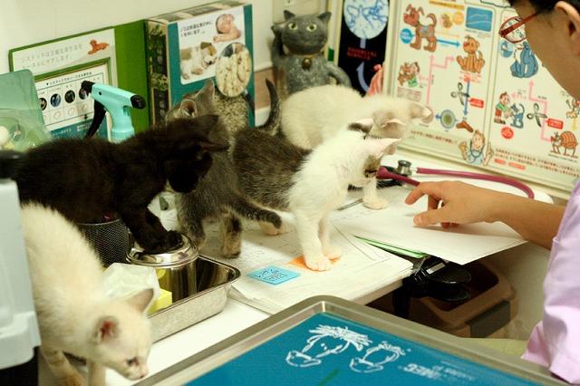 kitty5_38.jpg