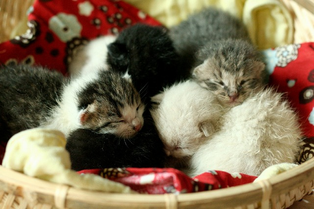 kitty5_9.jpg