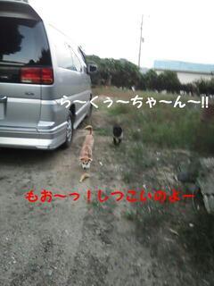 moblog_5787ef30.jpg