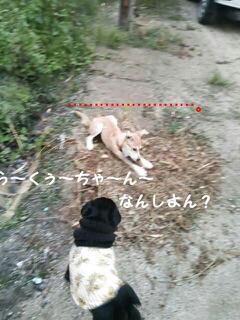 moblog_a6f918fc.jpg