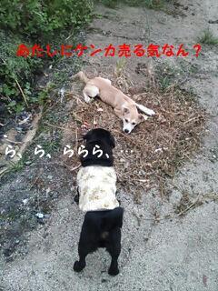 moblog_b9df6382.jpg