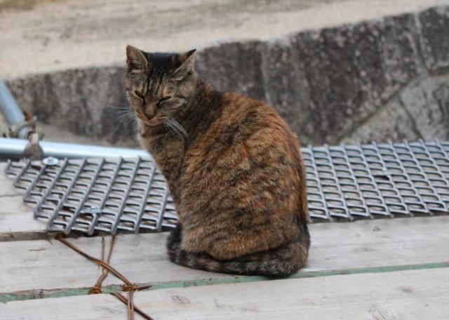 2013.11.2尾道・猫1