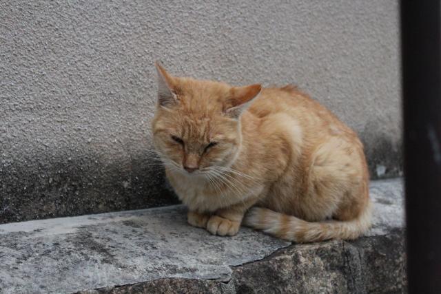 2013.11.2尾道・猫2