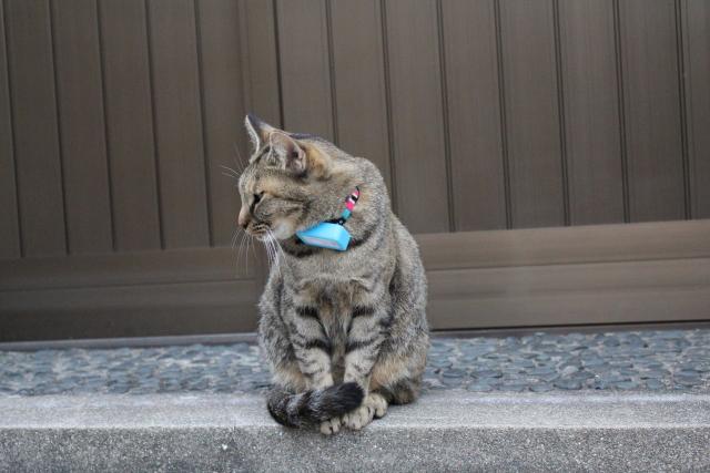 2013.11.2尾道・猫3