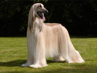breed_image.jpg