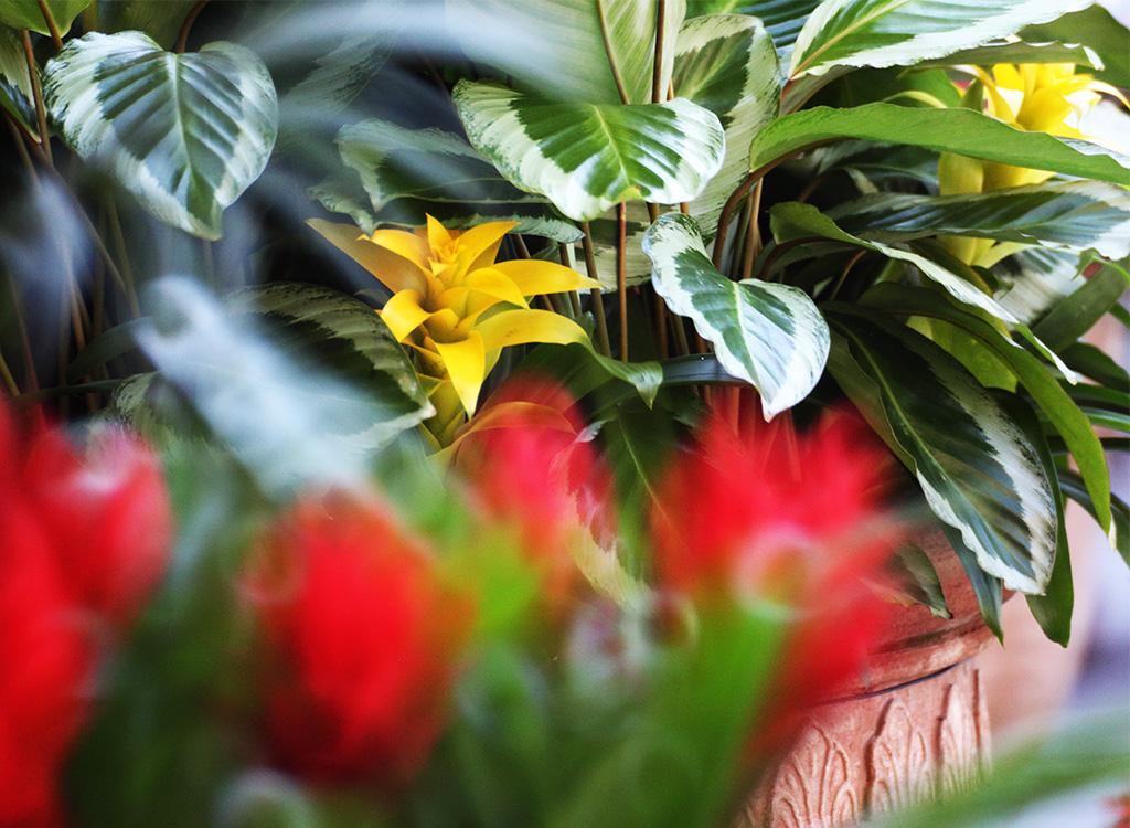 メディテレーニアンハーバーの花